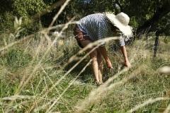 Comment créer une prairie maigre dans son jardin. Récolte de foin fleuri.