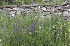 fête de la nature au jardin les 25 et 26 mai 2019
