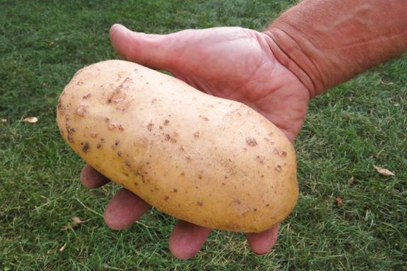 Le Jardin des Possibles a la patate