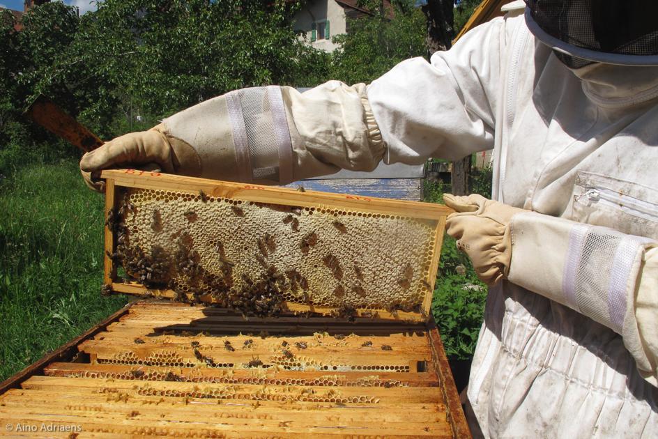 Peu de miel, mais quel miel!