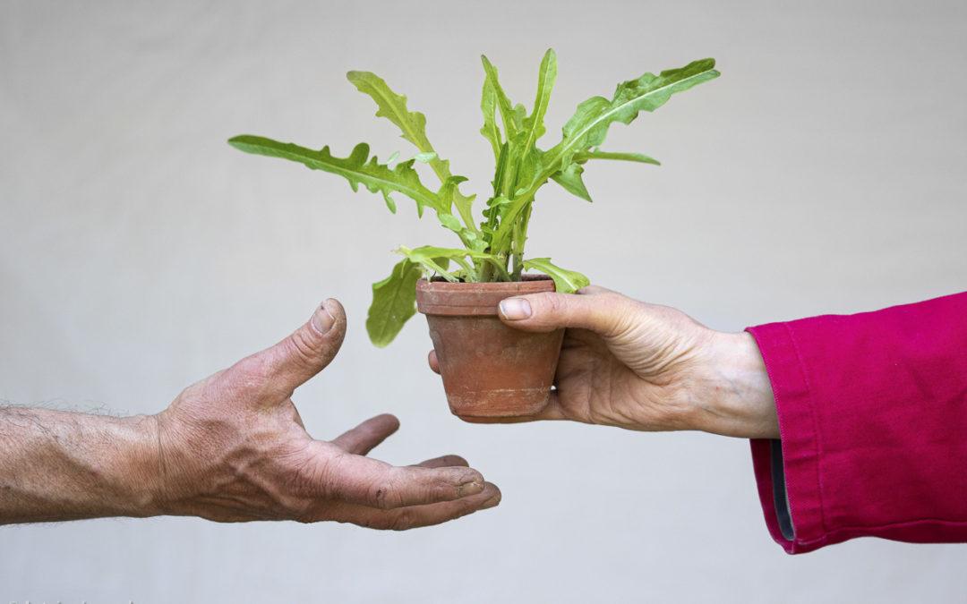 Et si on rendait le jardinage viral?