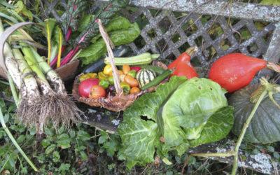 Des légumes à gogo, pour quasi tout l'hiver!