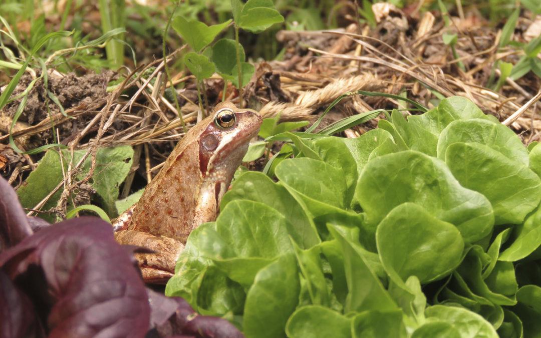 Comment et pourquoi favoriser la biodiversité au jardin?