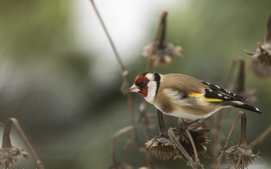 Laissons du chenit pour les oiseaux!