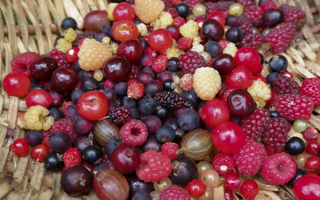 La multiplication des petits fruits