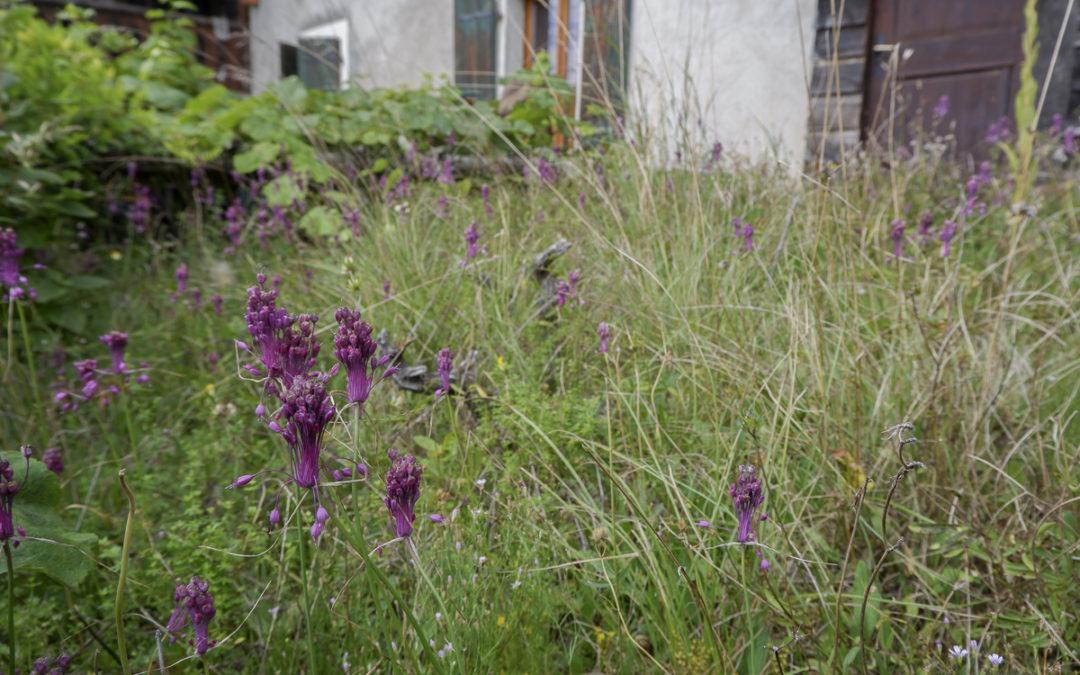 Des fleurs jusqu'au bout des toits